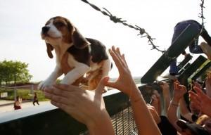 Um dos cachorros libertados na ação das ONGs em abril (Foto: Reprodução/http://www.fermaregreenhill.net)