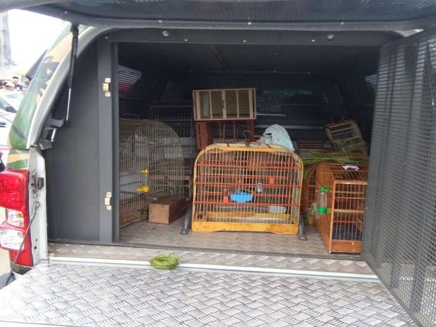 Coopa apreendeu 65 aves em feira de comércio ilegal na Bahia (Foto: Divulgação / Polícia Militar )