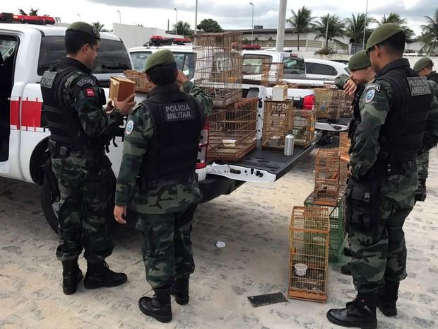 Aves foram resgatadas em feira pública no Centro de Santa Rita neste sábado (11) (Foto: Walter Paparazzo/G1)