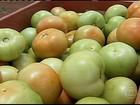 Produtores de tomate de MG buscam alternativas para reduzir os prejuízos