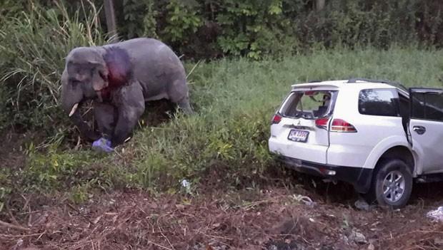 Elefante atingido por carro é visto em local de acidente na Tailândia nesta quarta-feira (12). Ele acabou morrendo horas depois (Foto: Reuters)