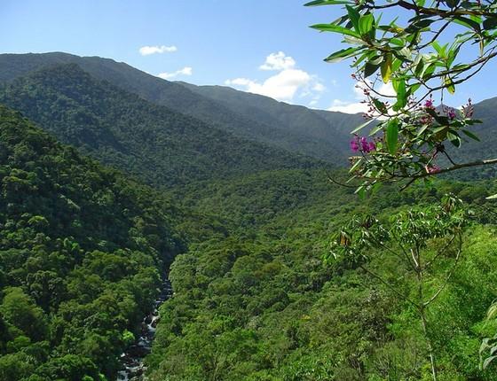 A Floresta Nacional do Jamanxim, no Pará, uma das unidades de conservação com maior índice de desmatamento na Amazônia (Foto: Divulgação/ICMBio)