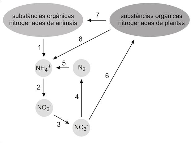 Resumo do ciclo do nitrogênio (Foto: Reprodução/UERJ)