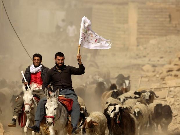 Homens que abandonaram a vila de Bazwaia chegam a um ponto de controle especial tocando um rebanho de cabras, um deles erguendo uma bandeira branca, a leste de Mosul, no Iraque (Foto: Zohra Bensemra/Reuters)