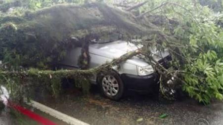 Corpo de Bombeiros relatou ter atendido 25 ocorrências relacionadas a árvores caídas  (Foto: Reprodução/RBS TV)