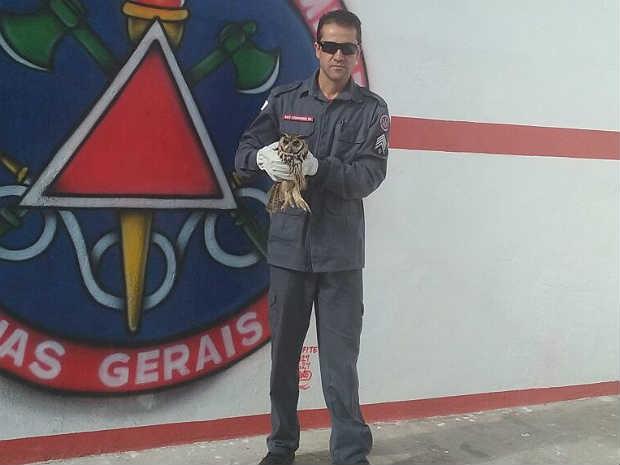 Coruja encontrada no Bairro São José Barbacena  (Foto: Bombeiros Barbacena/Divulgação)