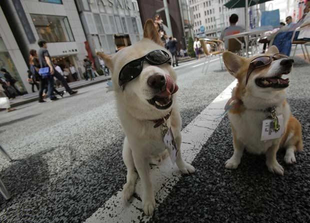Cães de óculos escuro 'posam' em rua de Ginza, distrito comercial de Tóquio, em 10 de junho de 2012 (Foto: Itsuo Inouye/AP)