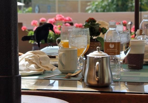 Aves invasoras 'atacam' café da manhã (Fot Dennis Barbosa/G1)