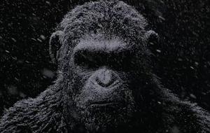 Começou a guerra pelo 'Planeta dos Macacos'