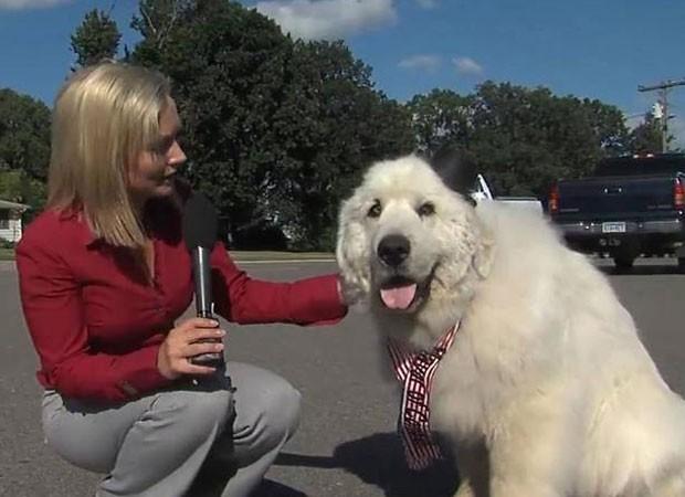 Duke, de 7 anos, surpreendeu ao vencer eleição para prefeito de cidade no estado de Minnesota (Foto: Reprodução/YouTube/CBS)