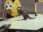 Parque promove torneio de futebol com lontras e leões-marinhos
