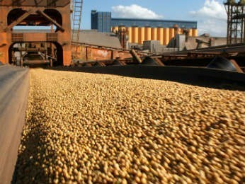 Exportação soja  (Foto: Divulgação )