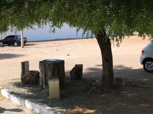 Árvore fica do outro ladop da rua, em frente à casa do suspeito (Foto: Amanda Franco/ G1)