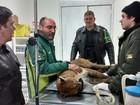 Puma é encontrado ferido em rodovia e levado a zoológico na Serra do RS