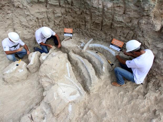 MG - FÓSSEIS/DINOSSAUROS/MG - GERAL - Arqueólogos encontram fósseis de costelas, vértebras, tíbias e partes da cintura escapular de dinossauros, todas ainda inseridas nas rochas originais,durante as escavações para a construção de um conjunto de edifícios (Foto: L.ADOLFO/ESTADÃO CONTEÚDO)