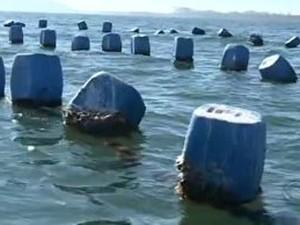 Mais 3 localidades são liberadas para retirada e consumo de moluscos (Foto: Reprodução/RBS TV)