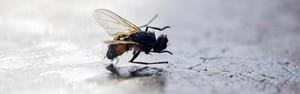 Truques para espantar moscas de casa (Divulgação)