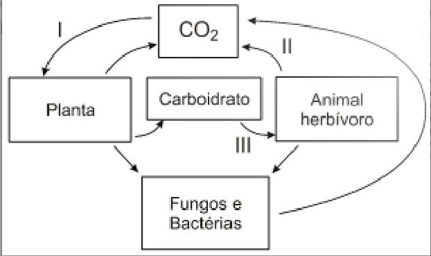 Representação do ciclo do carbono (Foto: Reprodução/UCS)