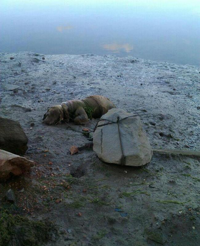 planeta_bicho_cachorro_abandonado_praia (Foto: Reprodução/ANDA - Agência de Notícias de Direitos Animais)