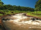 Filhote de jacaré ataca atleta de projeto de canoagem em Foz do Iguaçu