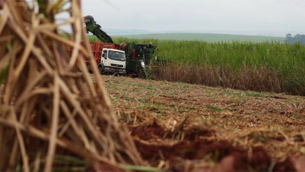"""Conheça a energia que brota da terra: a """"biomassa"""" (Foto: Reprodução/RPC)"""