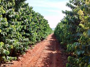 Apesar de cenário positivo, produtores estão insatisfeitos com políticas do Governo para o setor (Foto: Mauro de Melo)