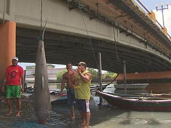 Tubarão foi capturado no Recife. (Foto: Reprodução / TV Globo)