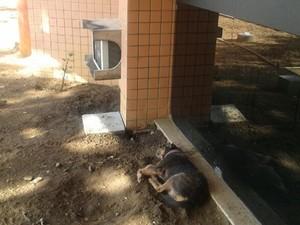 Cão passa 4 dias em frente à hospital esperando pelo dono internado em Teresina (Foto: Francinete Oliveira)
