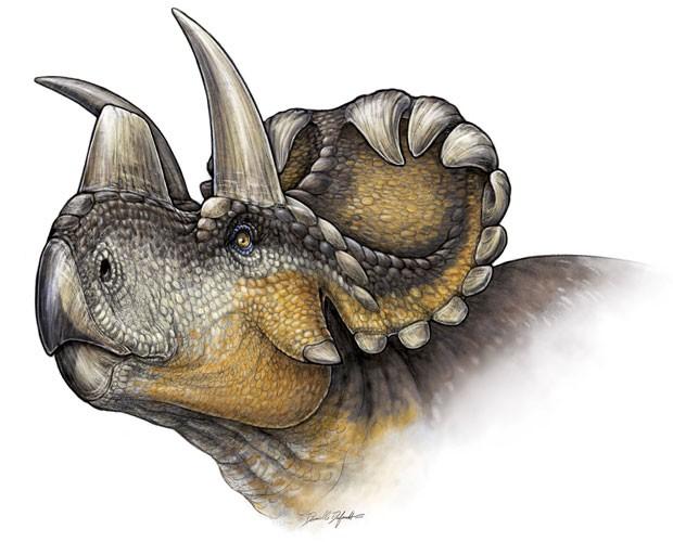 Nova espécie de dinossauro descoberta foi nomeada 'Wendiceratops pinhornenis'  (Foto: Reuters/Danielle Dufault)