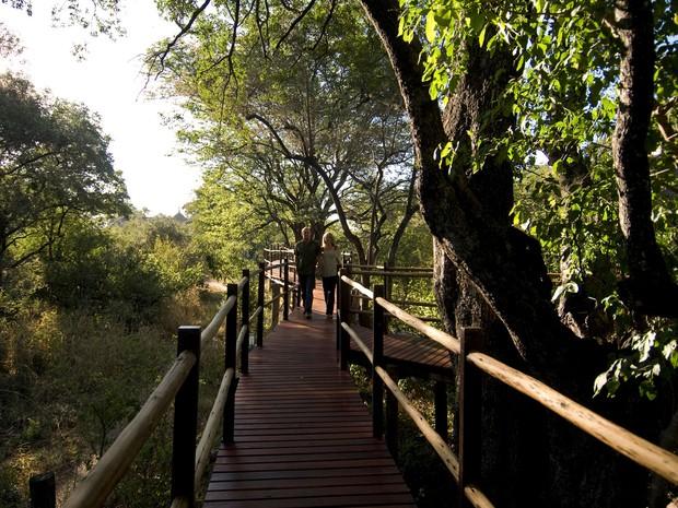 Passarela na árvore do hotel Sanctuary Sussi & m na Zâmbia (Foto: Divulgação/Sanctuary Retreats)