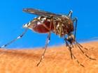 Secretaria de Saúde confirma mais de 10 mil casos de dengue no Paraná
