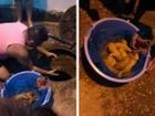 Cadela dá à luz 10 filhotes dentro de bueiro e é resgatada em Jacareí, SP