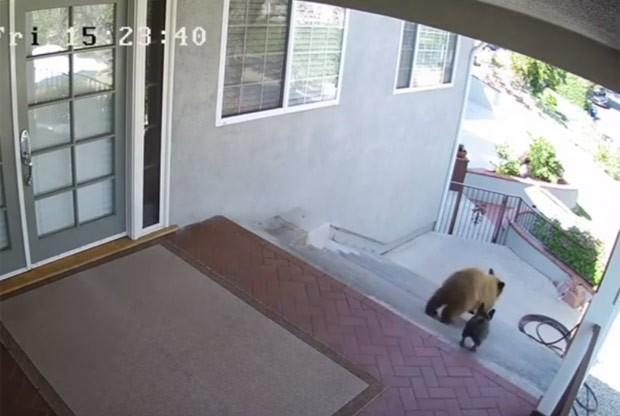 Buldogue francês virou hit ao expulsar ursos de casa nos EUA (Foto: Reprodução/YouTube/Ferns channel)