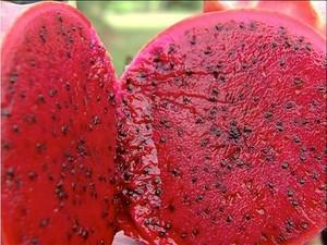 Também conhecida como fruta do dragão, a pitaia tem sabor leve e adocicado (Foto: Reprodução/TV Anhanguera)