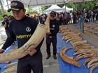 Carga com três toneladas de marfim africano é confiscada na Tailândia