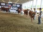 Vencedores da raça 'Limousin' são divulgados na Expoeste, em Chapecó