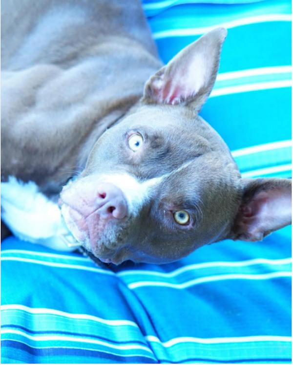 A cachorrinha Tani do ator Liam Hemswoth (Foto: Instagram)