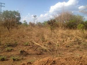 Corpo foi encontrado em matagal na quadra 205 Norte, em Palmas (Foto: Monique Almeida/G1)