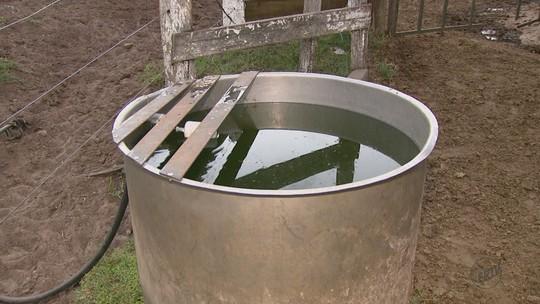 Mudanças na ordenha de leite ajudam a economizar água, aponta Embrapa