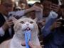 Gato celebridade de Hong Kong atrai multidão em 'despedida'