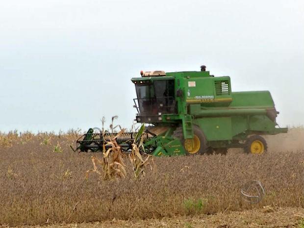 Na fazenda Monte Azul, em São Gabriel do Oeste, produtor Jânio Pinesso já iniciou a colheita da safra de soja (Foto: Reprodução/TV Morena)