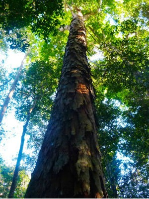 Amazônia (Foto: Unboxed Media)