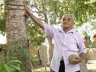 Pequizeiro produz fruto de 2 kg e surpreende produtor rural no TO