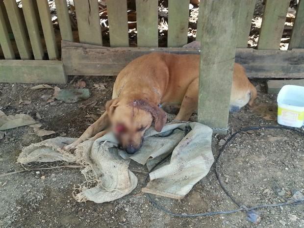 Cachorro foi arrastado por cerca de 200 metros. O olho esquerdo do animal saiu do globo ocular. (Foto: Divulgação/ Policia Civil)
