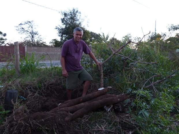Aipim gigante é colhida em São João da Barra (Foto: Arquivo Pessoal / Marcelo Silva Gomes)