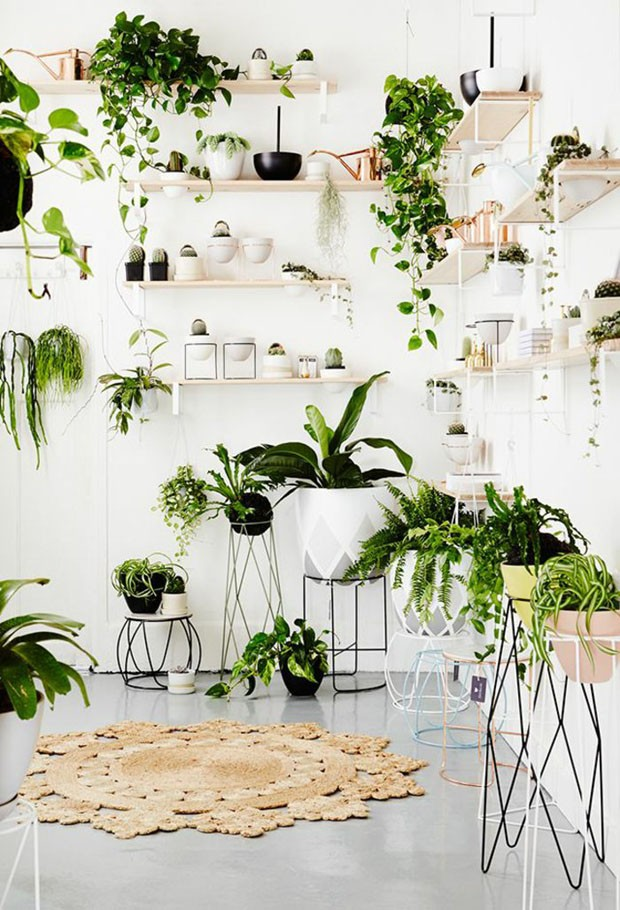 Como deixar a casa mais fresca com plantas em 5 passos