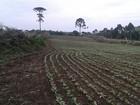 Polícia Ambiental localiza 8 hectares de área desmatada em Rebouças