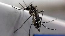 Vírus da zika tem disseminação mais rápida  (Paulo Whitaker/Reuters)