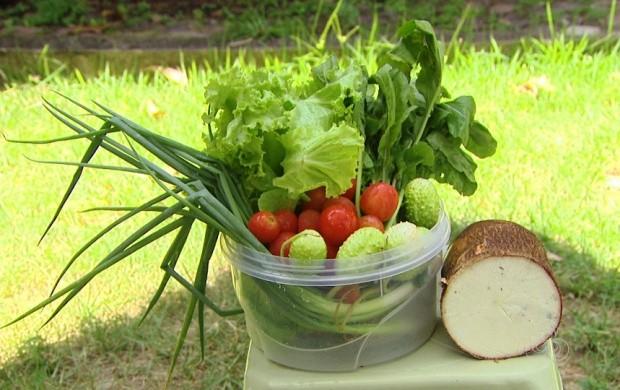 Essa é uma boa dica para quem gosta de consumir produtos livres de agrotóxicos (Foto: Roraima TV)
