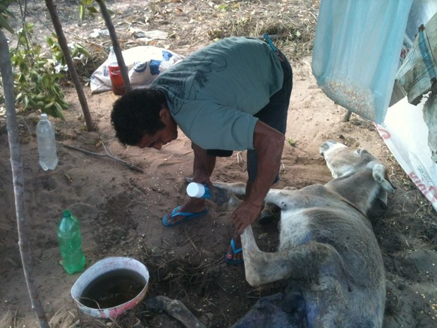 Catador de caranguejo comprou remédios para cuidar do animal acidentado (Foto: André Veras)